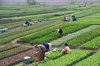 Agriculture_in_Vietnam
