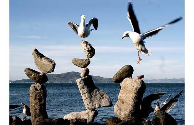 Bất chấp dáng vẻ loạng choạng của các tháp đá được sắp xếp cẩn thận, những con chim ở biển hoàn toàn tin tưởng vào sự ổn định của các tháp đá ấy, nên chúng xem như là chỗ đậu, thường làm sập tháp đá.