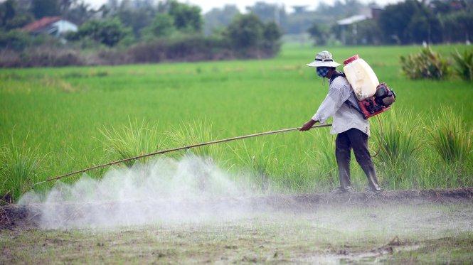 Phần lớn lưu lượng thuốc bảo vệ thực vật đều ngấm vào trong đất, tích tụ lâu ngày thành những chất rất độc hại. Nông dân phun thuốc bảo vệ thực vật cho lúa tại ấp 3, xã Tân Nhựt, huyện Bình Chánh, TP.HCM chiều 12-10 - Ảnh: Quang Định