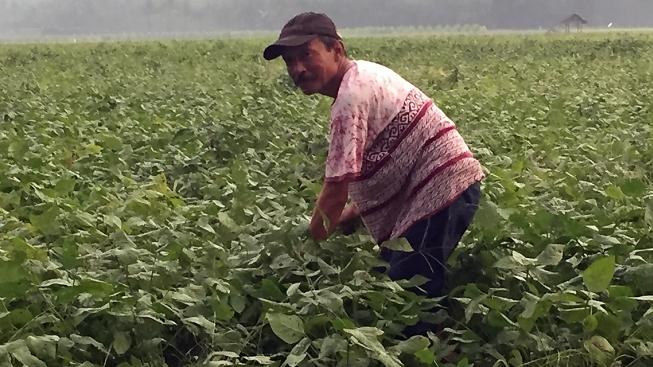 soybean021140x640