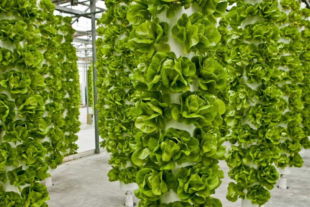 aeroponics-tower-system
