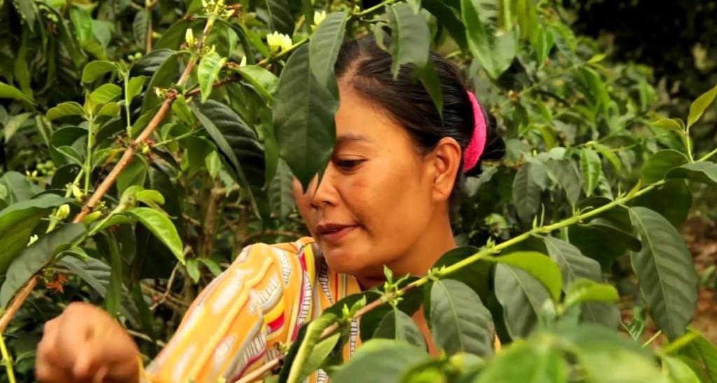 olam'coffe operations, vietnam