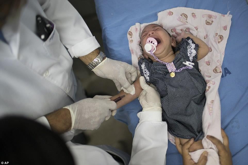 Một bác sĩ lấy máu của Luana - em sinh ra mắc chứng đầu teo - tại bệnh viện Oswaldo Cruz ở Recife.