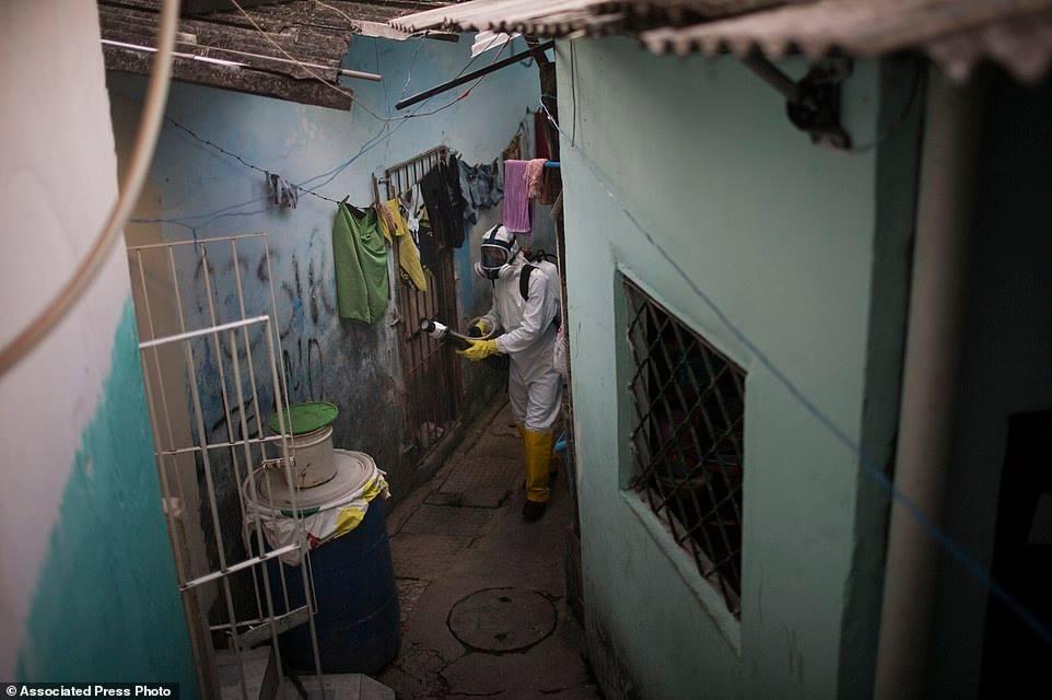 Đối mặt với cuộc khủng hoảng y tế cộng đồng đang phát triển theo hình xoắn ốc, tổng thống Dilma Roussef đã tuyên chiến với muỗi Aedes, với lời hứa triển khai 220.000 binh linh đến từng nhà giúp giáo dục người dân làm thế nào để ngăn ngừa muỗi sanh sôi.