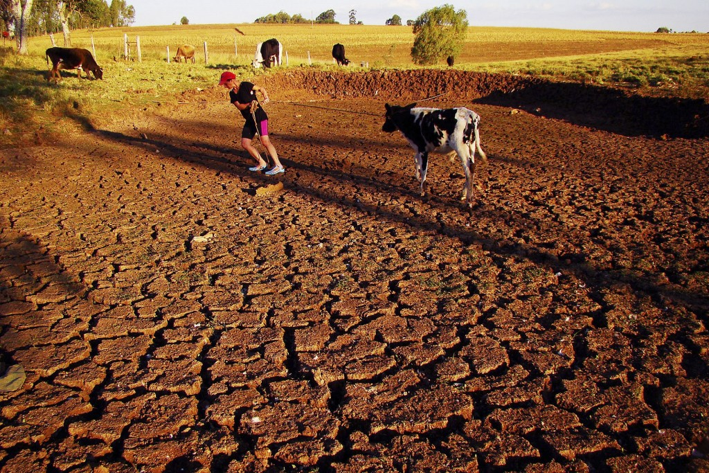 In this May 9, 2009 photo, farmer Nelci de Fatima Goncalves pulls a cow across a cracked field caused by a drought in Passo Fundo, Rio Grande do Sul, Brazil. Southern Brazilian states far from the Amazon have suffered from an extended drought, caused by La Nina, a periodic cooling of waters in the Pacific Ocean, while across the Amazon basin, river dwellers are trying to stay above rising floodwaters that have killed 44 people and left 376,000 homeless. (AP Photo/Vagner Guarezi, Agencia Freelancer)