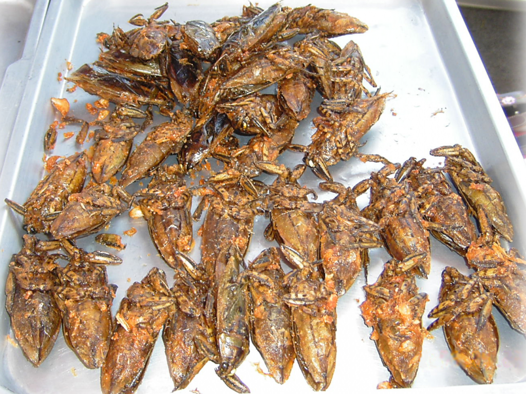 Giant_water_bugs_on_plate