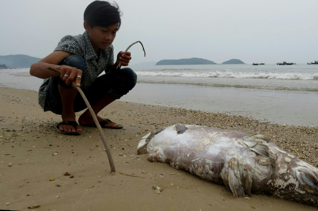 This picture taken on April 20, 2016 shows a boy looking at a dead fish on a beach in Quang Trach district in the central coastal province of Quang Binh. Taiwanese conglomerate Formosa was under attack in Vietnam's normally staid state-media on April 25 over allegations of industrial pollution leaching from a multi-billion dollar steel mill that may have caused mysterious mass fish deaths. / AFP PHOTO / STR