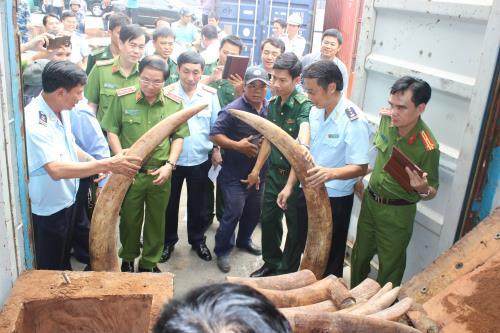 Phát hiện lô hàng hơn 2 tấn nghi là ngà voi nhập khẩu vào cửa khẩu cảng Sài Gòn. Ảnh: TTXVN