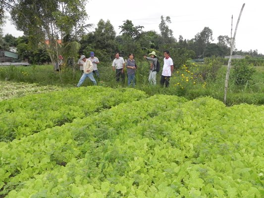 Tham quan khảo sát vườn rau Hữu cơ PGS của nông dân Mai Văn Trơn- Thị trấn Ba Tri - Bến Tre.