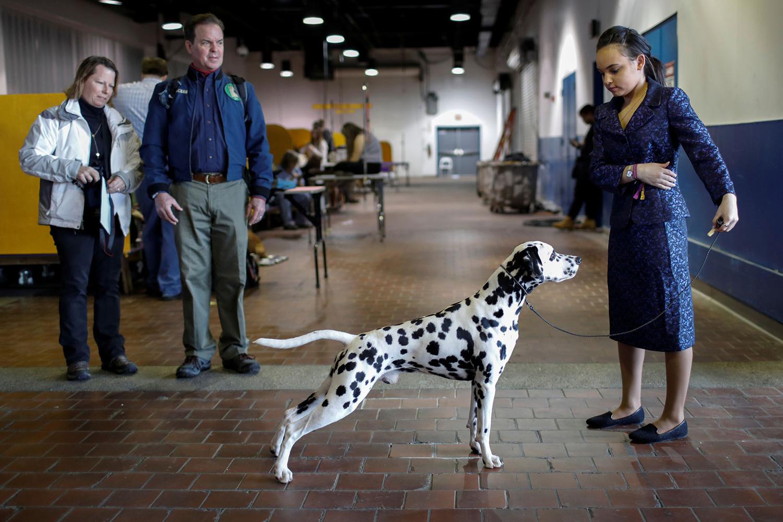 20. Một huấn luyện viên đứng cùng với một con Dalmatian trong lúc thực hành ở khu vực chuẩn bị trước cuộc thi hôm 13.2.