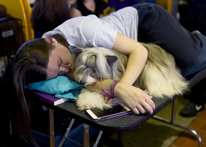 30. Một con Crested Powder Puff Trung Quốc cùng Kristen Riddley nghỉ ngơi ở khu vực chuẩn bị ngày thứ nhất hôm 13.2.